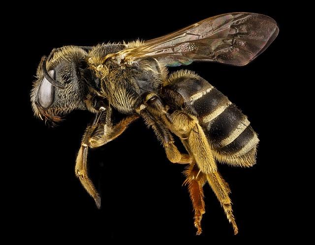 Comment faire dégonfler une piqûre d'insecte ?