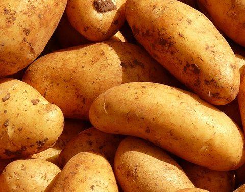 [Santé] Peut-on manger des pommes de terre germées ?