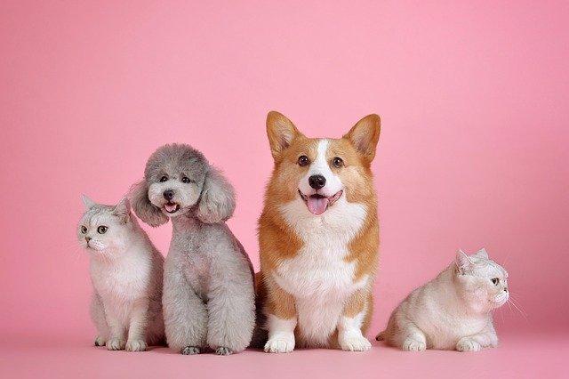 Qu'est-ce que la zoothérapie ou la thérapie assistée par les animaux ?